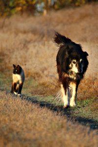 Chisholm Trail Veterinary Clinic of Lockhart, TX